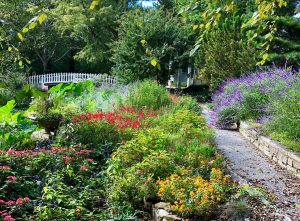 Photo courtesy of Bartlett Arboretum