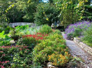 Photo courtesy of Bartlett Arboretum